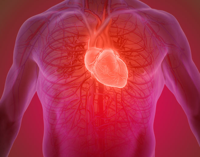 cardiology-heart-circulatory-system/