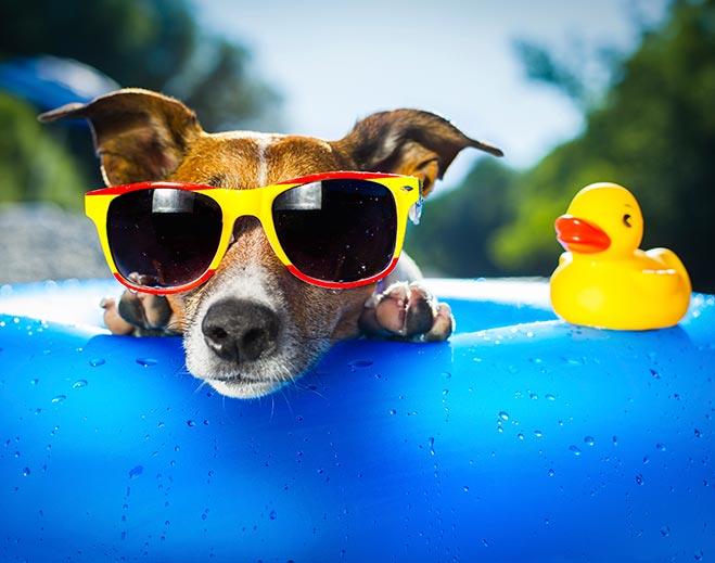 dog-with-sunglasses/