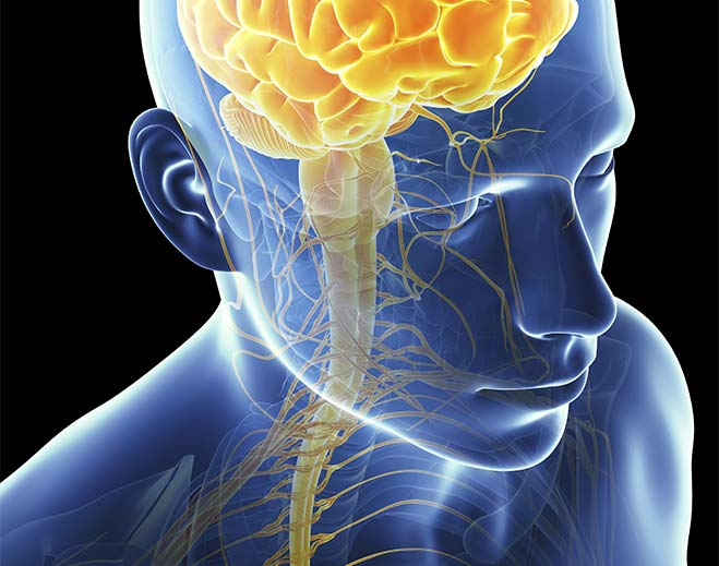 neurology-brain-stem-medulla-cranial-nerves/